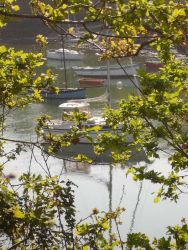 bateau arbre mer-min
